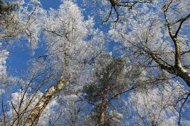 blossom trees free images tree nature branch snow sky flower frost