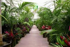 discount palm trees cycads tropical plants on sale right now