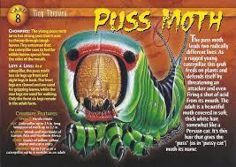 image puss moth front jpg wierd u0027wild creatures wiki fandom