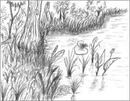simple nature drawings