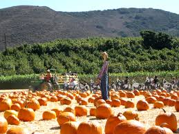 6 family friendly fall attractions southern california minitime
