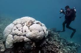 large sections of australia s great reef are now dead scientists