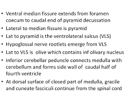 Pyramids Of The Medulla Detailed Anatomy Of The Medulla