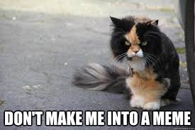 Make A Picture Into A Meme - don t make me into a meme angry cat quickmeme