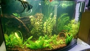 Live Plants In Community Aquariums by How To Fix Cloudy Tank Water Ratemyfishtank Com
