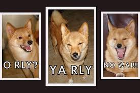 Meme Orly - taro shiba does the o rly ya rly no waii owls taro repl flickr