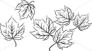 black and white maple leaf cluster thanksgiving clipart