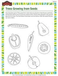 trees growing from seeds u2013 kindergarten science worksheet u2013