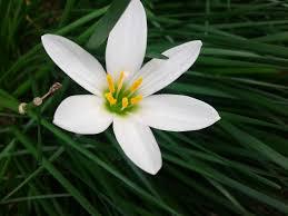 ornamental flowers innovative farming solutions