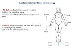 Human Anatomy Words Introduction To Anatomy