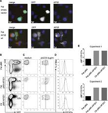 mutations in ap3d1 associated with immunodeficiency and seizures