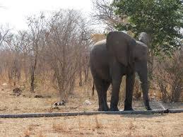 an african elephant photo essay the world wanderer