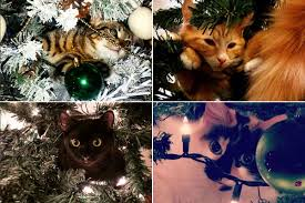 cats hanging in christmas trees is a new instagram obsession