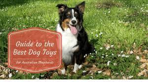 australian shepherd top speed best dog toys for australian shepherds and factors to consider 2017