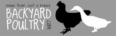 Backyard Chickens Forum by Backyard Poultry Forum
