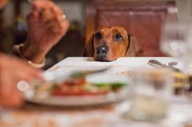 can dogs eat thanksgiving dinner well
