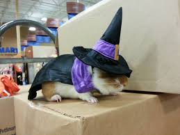small dog witch costume 21 pet halloween costumes that are adorable ridiculous emotionally