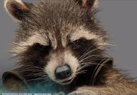 Evil Raccoon Meme - image result for evil raccoon meme art pinterest raccoon hands
