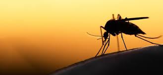 moustique dans ma chambre comment éviter ou soulager les piqûres de moustiques