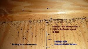 What Do A Bed Bug Look Like Real Life Bed Bugs Infestations U0027 Pictures 1 Pest Control Of Bed