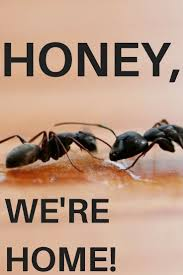 54 best ants images on pinterest ants pest control and insects