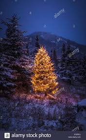 lighted christmas tree lighted christmas tree in forest of snow covered trees in stock