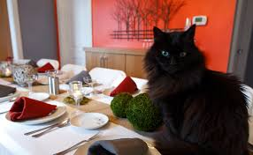 thanksgiving etiquette tips for cats care2 healthy living