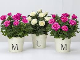 Picture Of Mums The Flowers - happy mother u0027s day 2017 pictures and messages to help you