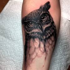 murphy owl black and grey