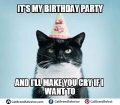 Cat Birthday Memes - cat happy birthday meme funny cute angry grumpy cats memes
