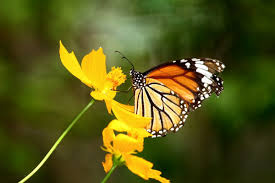 the monarch butterflies in mexico mexperience