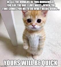 Murder Meme - kitten thinks of nothing but murder all day imgflip