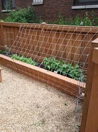 green bean trellis installed 2011