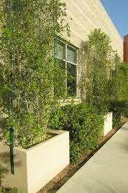 planters with trellis greenscreen