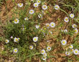 arizona native plants list desert plants in the western united states and northern mexico