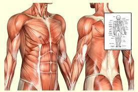 Human Physiology And Anatomy Book Health Supplements Learn Human Anatomy And Physiology Course