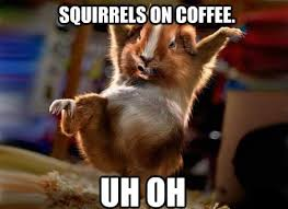 Dramatic Squirrel Meme - squirrel meme funny and crazy squirrel pictures