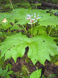 usda native plants north carolina native plants society native plants gallery