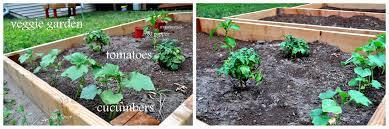 20 something allergies and counting u2026down u2013 vegetable garden update