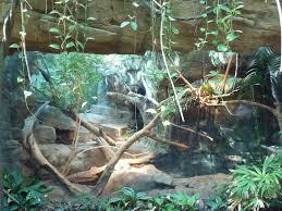 1240 best vivarium terrarium images on pinterest reptiles