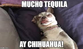 Meme Chihuahua - funny chihuahua imgflip