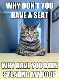 Lol Cat Meme - why don t you have a seat why have you been stealing my poop lol