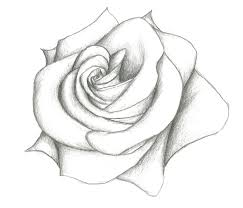 simple pencil sketches of flowers flowers ideas