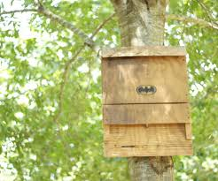 The Bat House a Green Energy Efficient Insect Repellant 7 Steps
