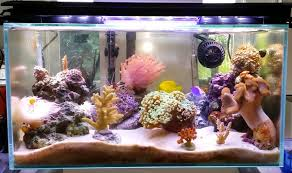 led reef lighting reviews best led aquarium lighting 2018 buyer s guide and reviews