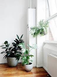 Plants Home Decor 95 Best Plants Images On Pinterest Plants Home And Landscaping