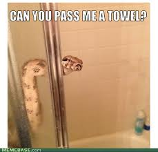 You Re A Towel Meme - 31 most funny snake meme pictures and images