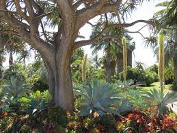 Huntington Botanical Garden by California The Huntington Library And Botanical Gardens Away