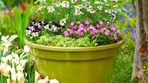 Plants For Patios In The Shade 12 Container Garden Combos