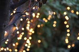 how to string lights on a tree free stock photo of bokeh of string lights on tree